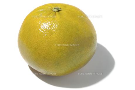 カクテルフルーツの素材 [FYI01151510]