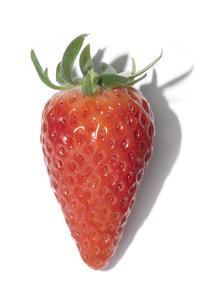 章姫苺の素材 [FYI01151538]