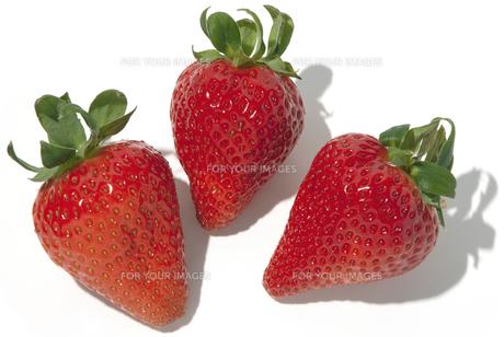 さくらもも苺の素材 [FYI01151553]