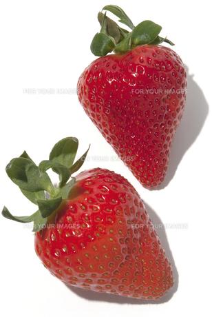 さくらもも苺の素材 [FYI01151632]