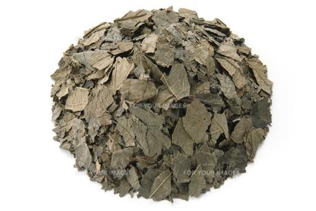 トチュウ茶の素材 [FYI01152215]