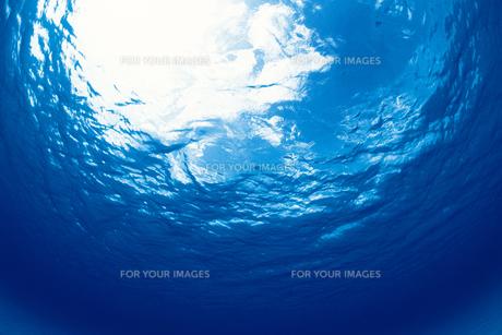 海中から見た空の素材 [FYI01153254]