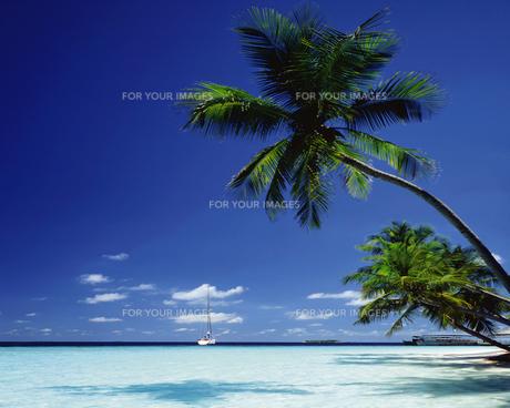 モルディブの海の素材 [FYI01153276]