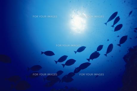 魚群の素材 [FYI01153450]