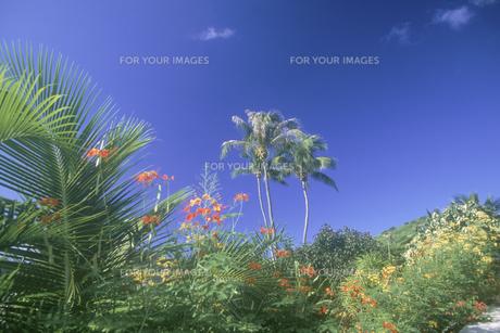 熱帯植物の素材 [FYI01153531]