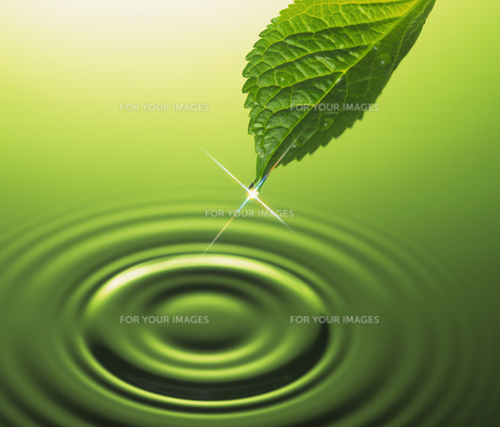 葉と波紋の素材 [FYI01153810]