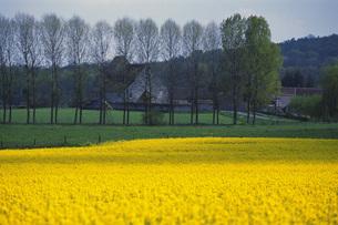 黄色い花と住宅の素材 [FYI01154269]