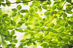 新緑の素材 [FYI01154465]