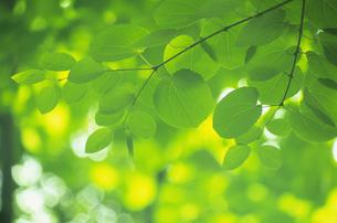 新緑の素材 [FYI01154537]