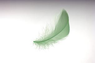 羽根の素材 [FYI01154564]