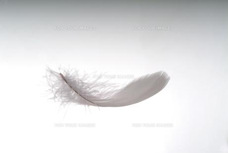 羽根の素材 [FYI01154585]