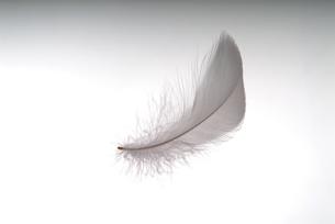 羽根の素材 [FYI01154711]