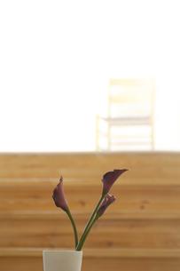 階段の前に飾った花の素材 [FYI01156790]