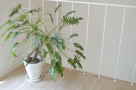 観葉植物の素材 [FYI01156852]