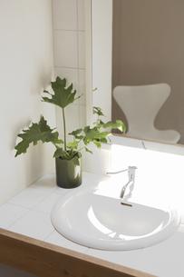 観葉植物を飾った洗面所の素材 [FYI01156881]