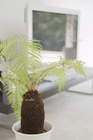 観葉植物の素材 [FYI01156932]