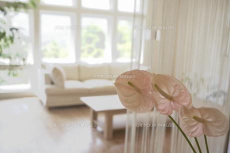 花とインテリアの素材 [FYI01156999]
