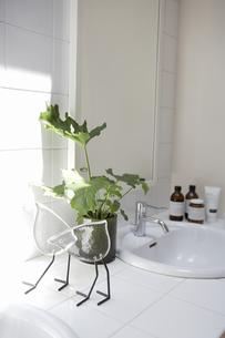 日のあたる洗面所の素材 [FYI01157179]