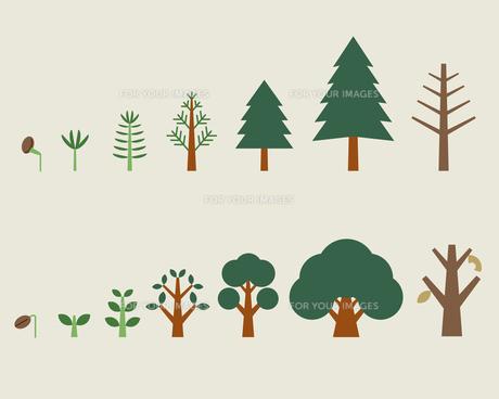 木の成長過程の素材 [FYI01157295]