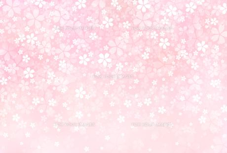 桜の素材 [FYI01157727]