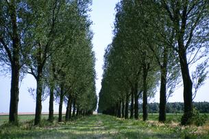 新緑の並木道の素材 [FYI01157891]