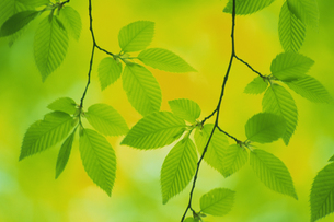 新緑の素材 [FYI01158022]