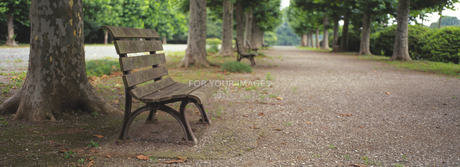 並木道とベンチの素材 [FYI01158073]