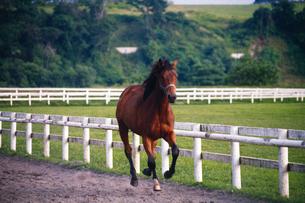 馬の素材 [FYI01158161]