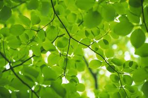 新緑の素材 [FYI01158210]