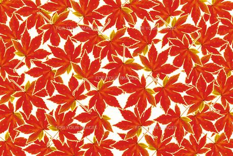 紅葉パターンの素材 [FYI01158227]