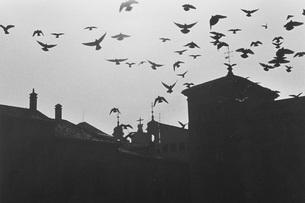羽ばたくハトの群の素材 [FYI01158269]