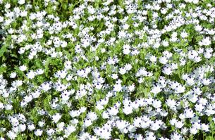 花畑の素材 [FYI01158423]