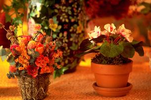 鉢植えの花の素材 [FYI01158491]