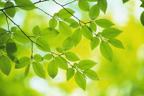 新緑の素材 [FYI01158671]
