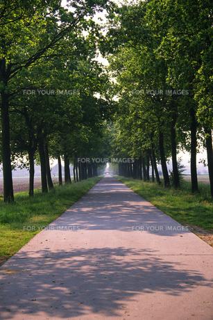 新緑の並木道の素材 [FYI01158748]