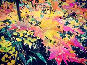 秋の紅葉ですの写真素材 [FYI01158873]