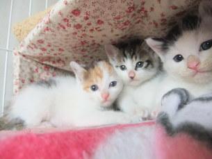 子猫の写真素材 [FYI01158963]