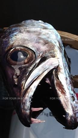 魚の頭の写真素材 [FYI01159123]