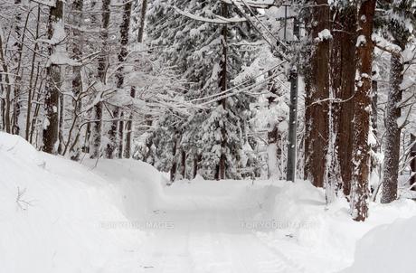雪 積雪 の写真素材 [FYI01159400]