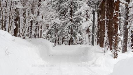 雪 積雪 の写真素材 [FYI01159401]