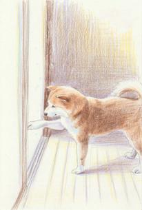 冬の柴犬のイラスト素材 [FYI01159439]