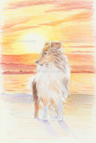 海の日の出と犬のイラスト素材 [FYI01159441]