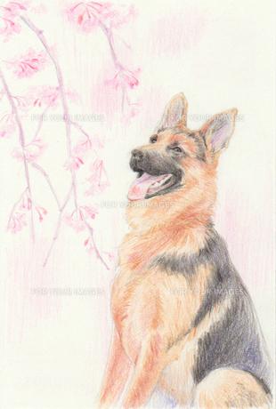 枝垂れ桜と犬のイラスト素材 [FYI01159443]