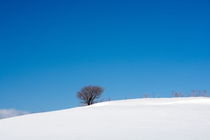 青空と雪原の写真素材 [FYI01159474]