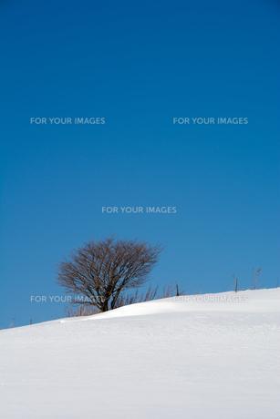 青空と雪原の写真素材 [FYI01159475]