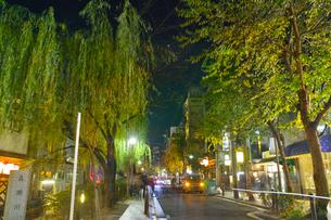 夜の木屋町通りと高瀬川の写真素材 [FYI01159597]