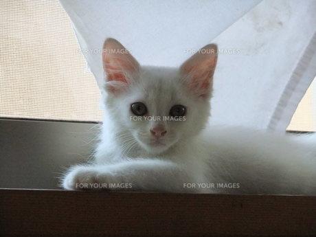 子猫の写真素材 [FYI01159758]