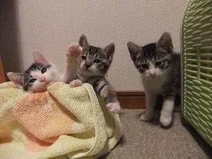 子猫の写真素材 [FYI01159762]