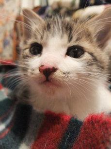 子猫の写真素材 [FYI01159764]