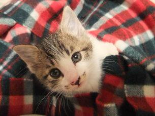 子猫の写真素材 [FYI01159765]